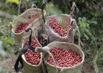 Yemeni Coffee
